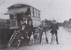 Gypsy lurchers