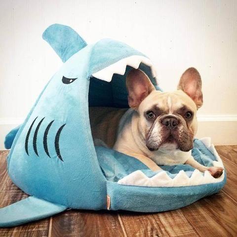 French Bulldog shark house