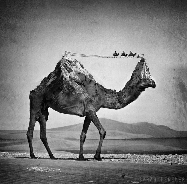 Black and white photo manipulations of animals