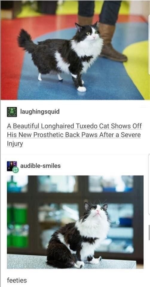 Make Your Caturday Even Better With These Funny Cat Memes
