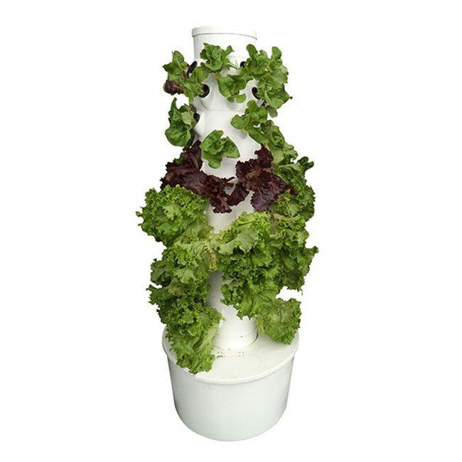 ¿Qué contiene la Horti tower? Contiene un sistema aeropónico con tina y torre con seis divisiones con cavidades y canastillas para poder cultivar hasta 48 plantas, motor, un frasco de solución nutritiva Hydrosolutions, hortalizas de hojas y un kit de germinación.