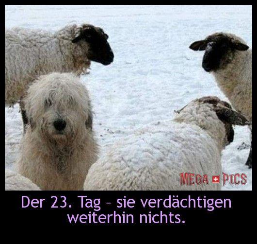 Der 23. Tag - sie verdächtigen weiterhin nichts! - www.MegaPics.ch