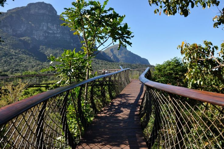 View from the top, boomslang, Kirstenbosch Gardens, Cape Town, South Africa Fun Things To Do In Cape Town This Summer Nomadic Existence