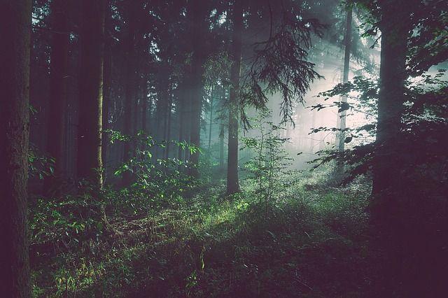 5'Post: Berlari Ke Hutan Taman Nasional Bukit Tigapuluh
