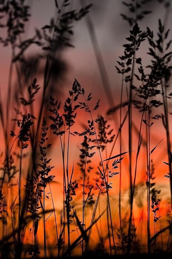✯ Sunset through the Grass. One of my favorite sunset pictures <3