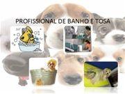 curso Banho e  tosa Buzzero.com - Ensinar