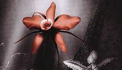Nightwish - art from Dark Passion Play (Amaranth)