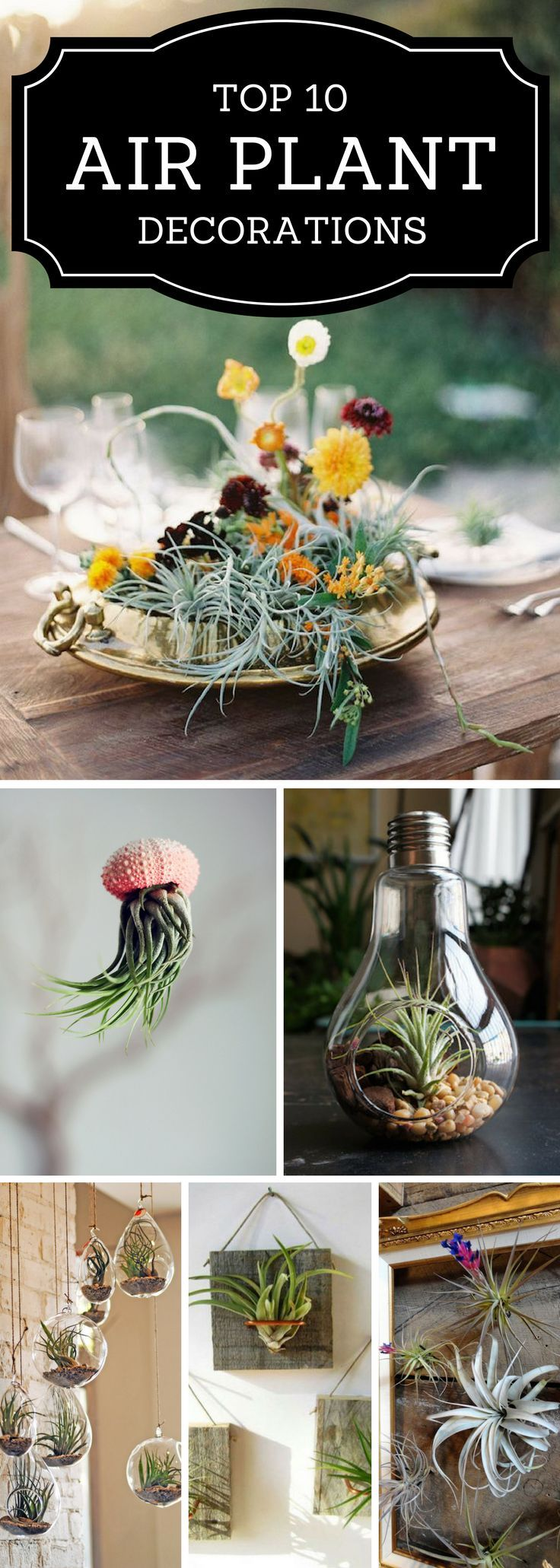 Plant Decoration In Living Room: Air Plant Decor - TOP 10 Beautiful Ideas
