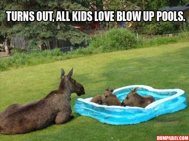 Moose fact: Turns out, all kids love blow up pools.