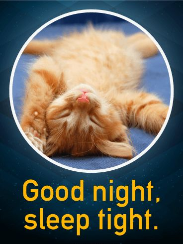 Sleep Tight - Good Night Wish Card: Good night, sleep tight, don't let the bed bugs bite! No worries about that here. This tabby cat dreams of catnip and mice. What do you dream about? Send this card to your favorite dreamer and wish them a good night. May we all sleep as adorably and comfortably as this kitten! Hush now, close your eyes, and nod off to dreamland with this cozy good night card.