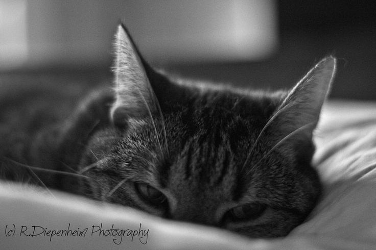 Shhhhh... I'm sleeping
