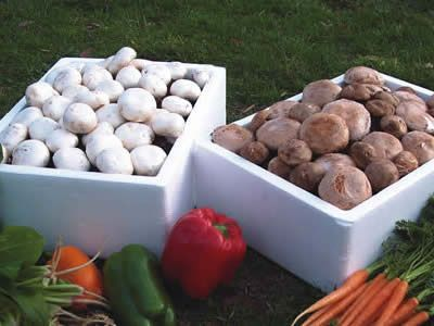 instructions for growing mushrooms without a kit..
