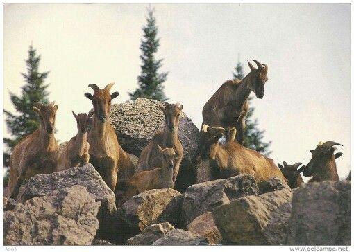 Zoo de st-Felicien en 1995