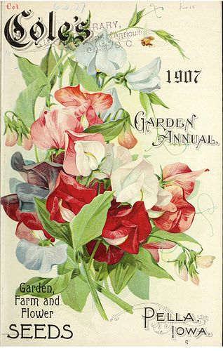 Sweet peas Cole's Garden Annual (1907)