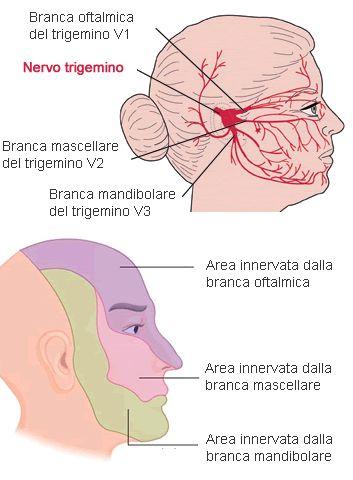 Nevralgia del trigemino Tratto da http://www.my-personaltrainer.it/salute-benessere/nevralgia-del-trigemino.html