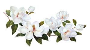 Znalezione obrazy dla zapytania kwiaty nasturcje