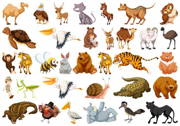 Set Of Wild Animal Free Vector Free Vector Freepik Freevector Freebackground Freeicon Freenature Freecharacter Animal Illustration Animals Wild Animals