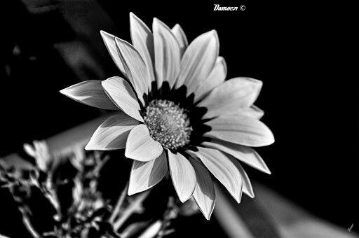 Bw flower shot