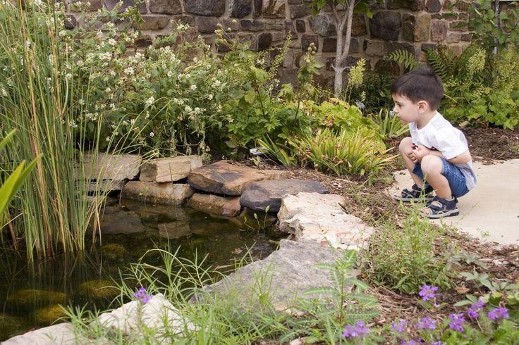 Как сделать пруд безопасным для детей? - Ботаничка.ru