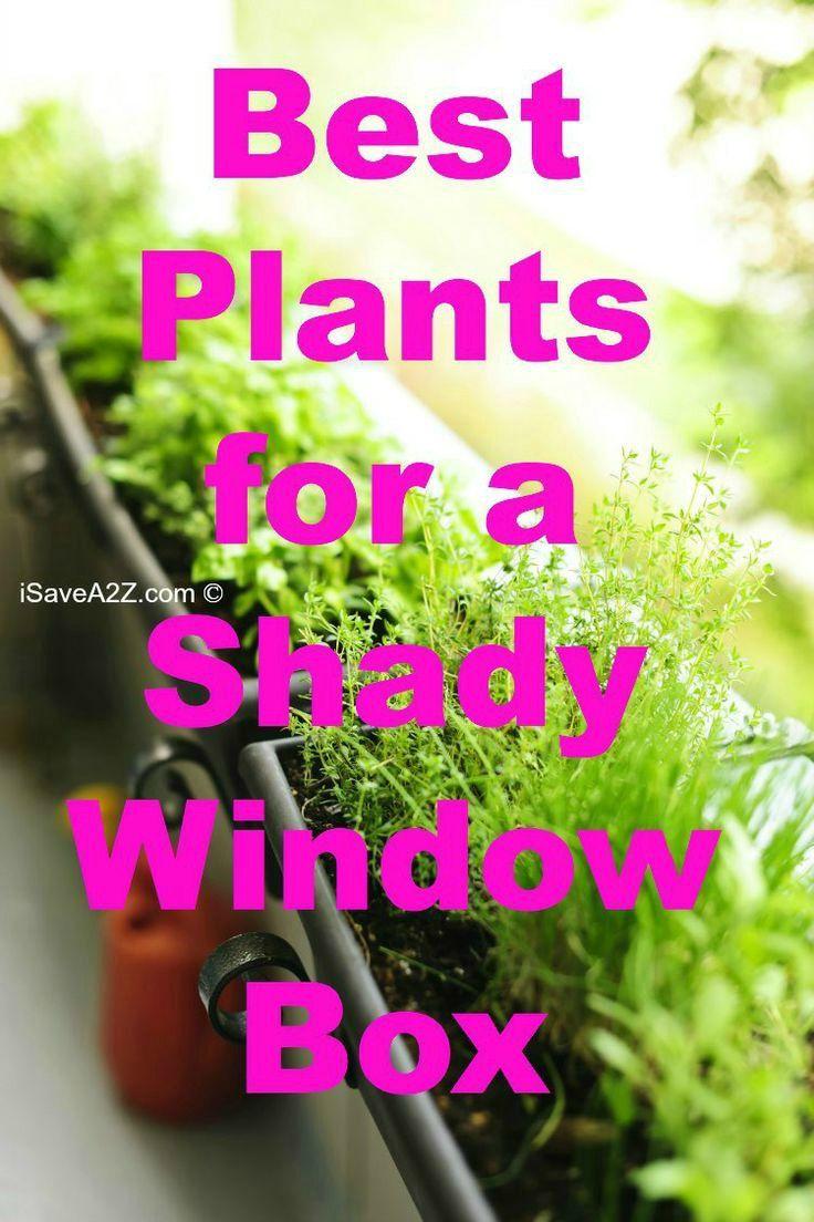 best window boxes images on pinterest balcony flower box
