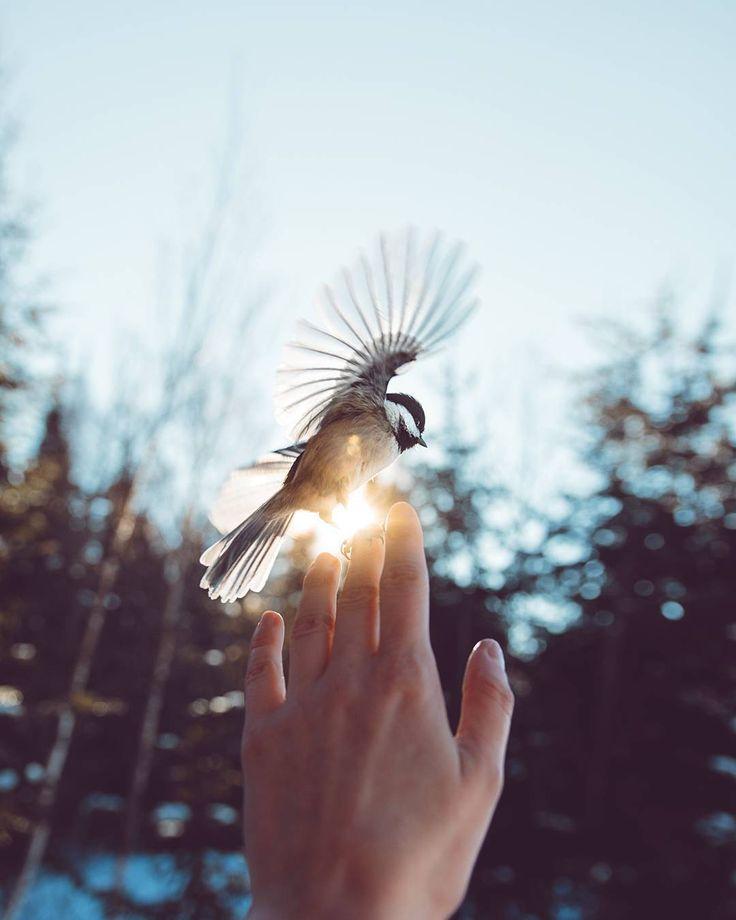 наклеек картинки на аву с птицами олимпусов подобоная функция