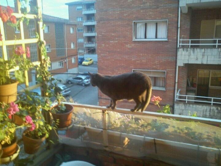Coco & the window