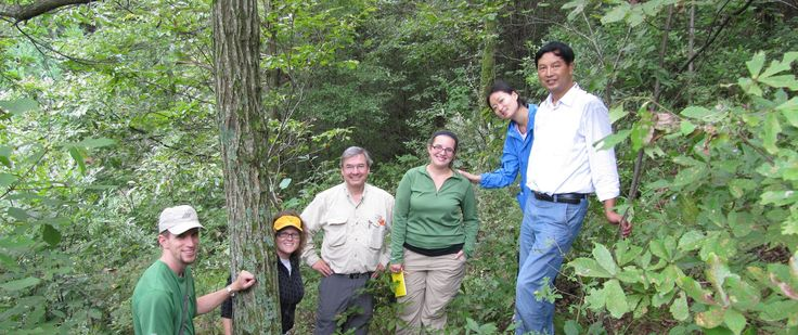New York Chapter | The American Chestnut Foundation - searching for American Chestnut mother trees
