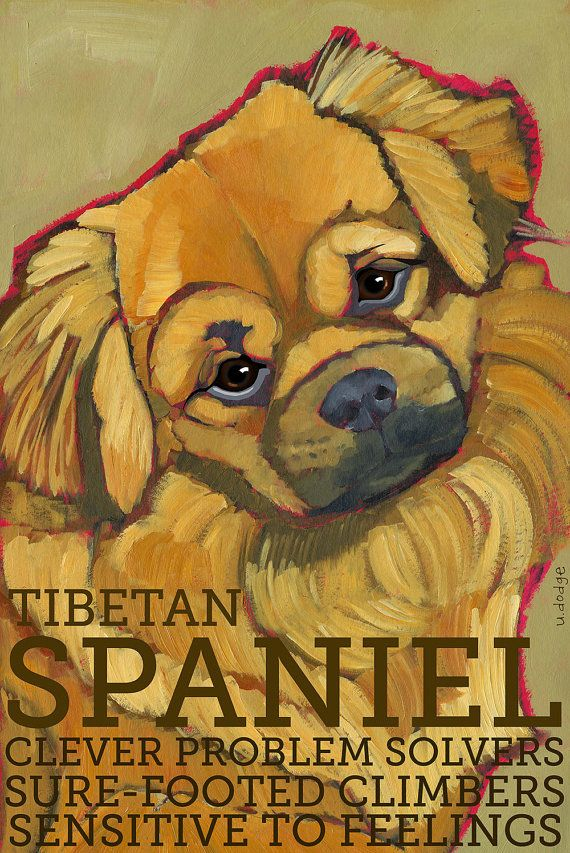 Tibetan Spaniel No. 1  magnets coasters and art by ursuladodge, $6.00