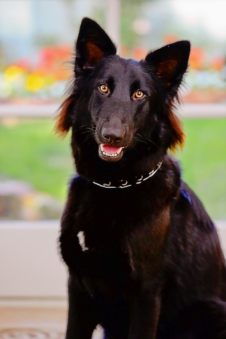 Cool Cuby Chubby Adorable Dog - 8d6d2cb45d67e047d762db56b1ec38f2--cade-ellie  2018_74276  .jpg
