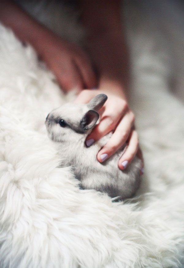 Bunnies | Eleonore Bridge, blog mode, site féminin, Paris