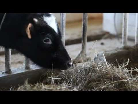 Sit back and watch this video of Baby Animals on the Shaker Farm and prepare to be awwwwed!