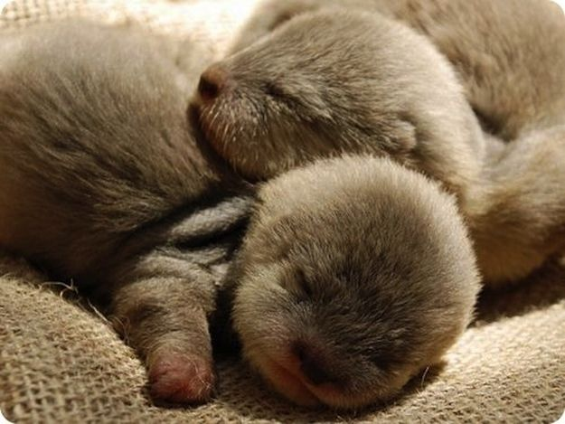 A pile of sleeping otters.