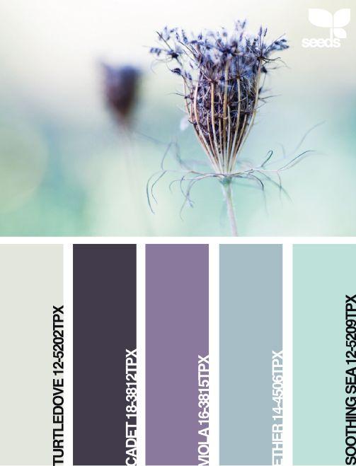 94 best colors purple aqua teal turquoise robin 39 s egg. Black Bedroom Furniture Sets. Home Design Ideas