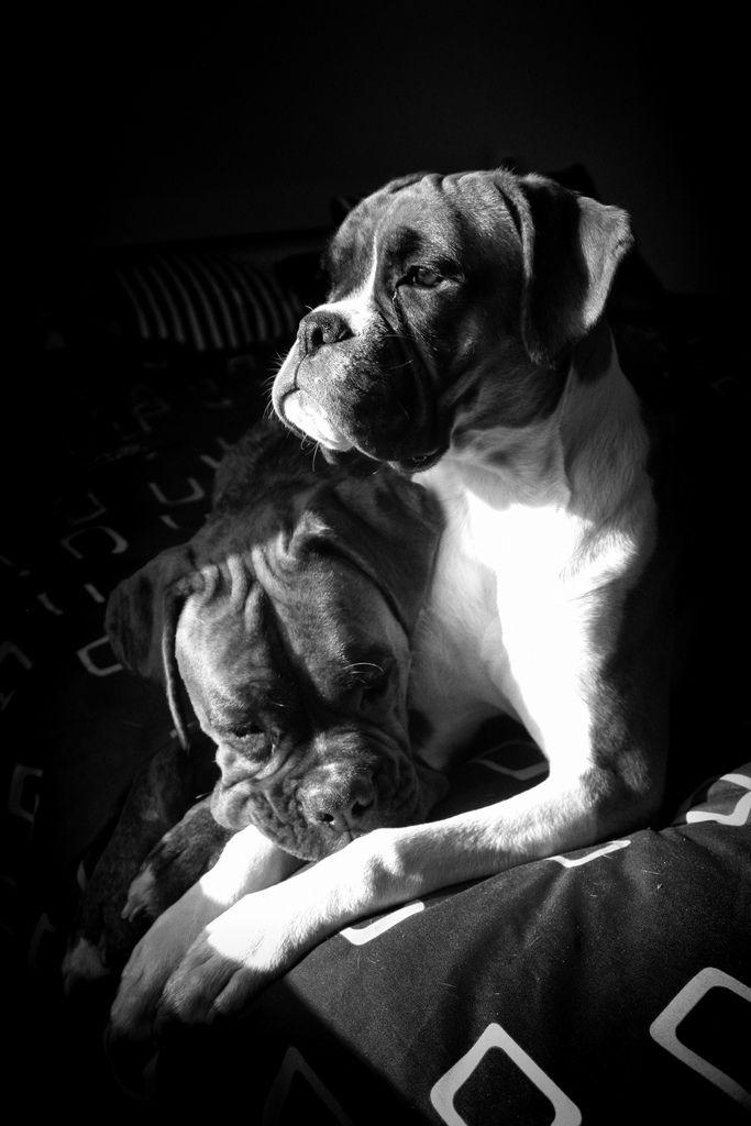 Bukowski & Aurora