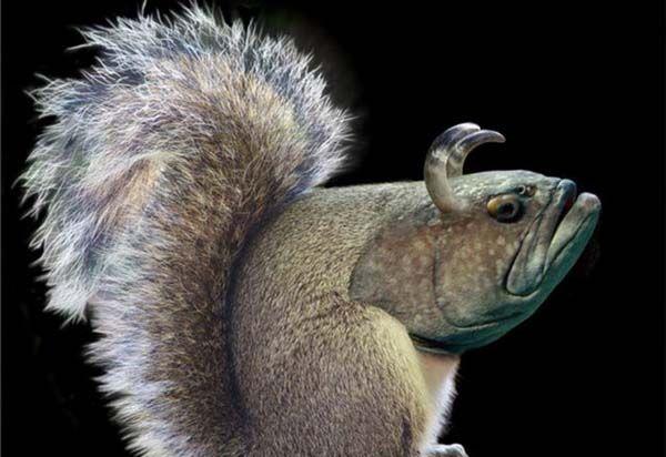 Photoshop ile Yapılmış Hayvan Fotoğrafları