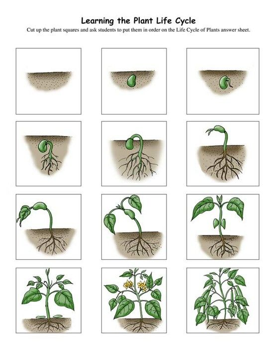 Vývojové fáze růstu rostliny | Domškola