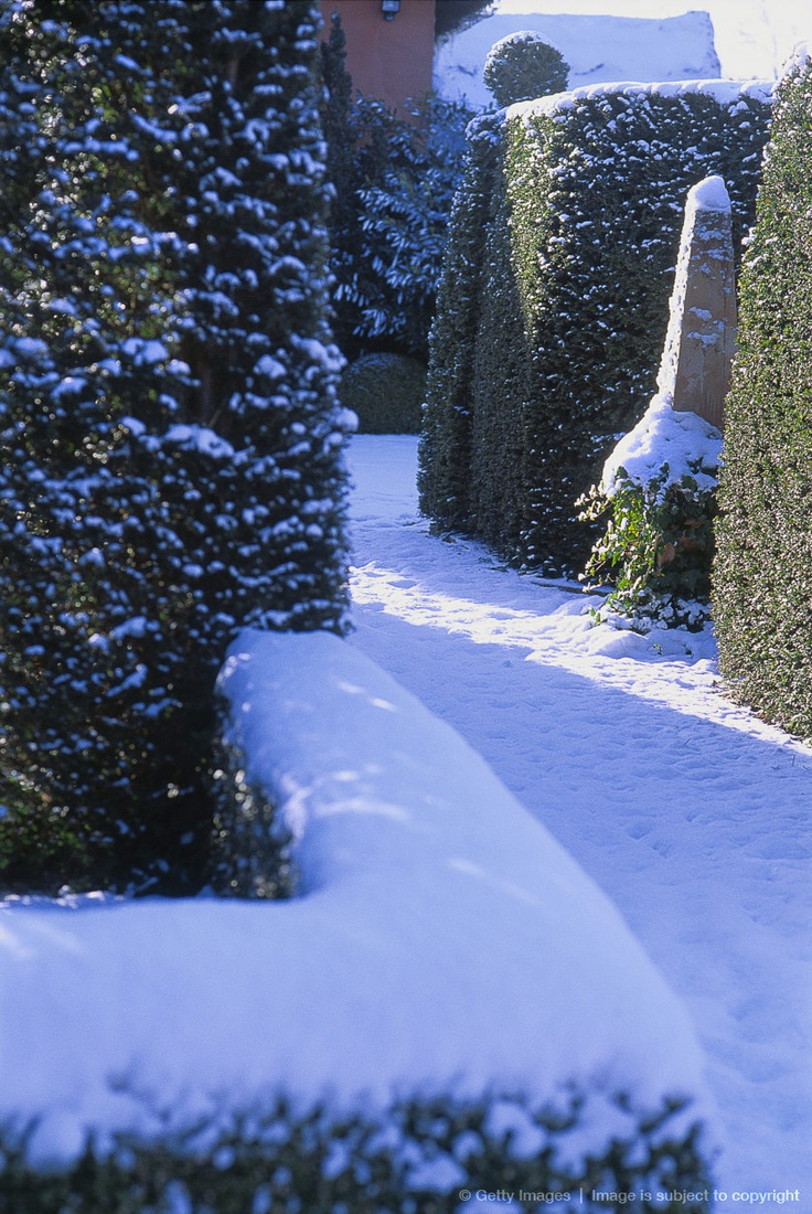 27 best winter garden images on pinterest winter garden