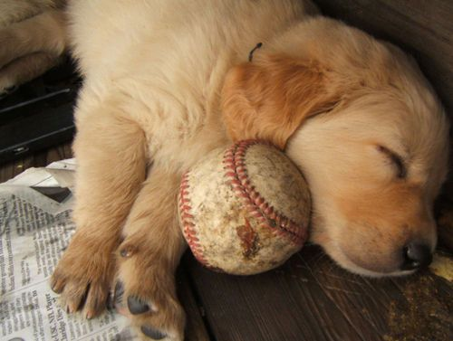 two loves: a puppy and baseball! :)