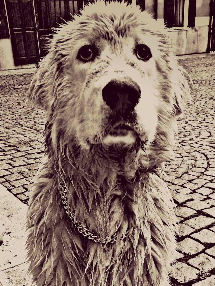 #TESEO  #LePinete #B&B #zen #relax #holiday #italy #viggiù #garden #hotel  #events #dog #cat  #bedandbreakfast