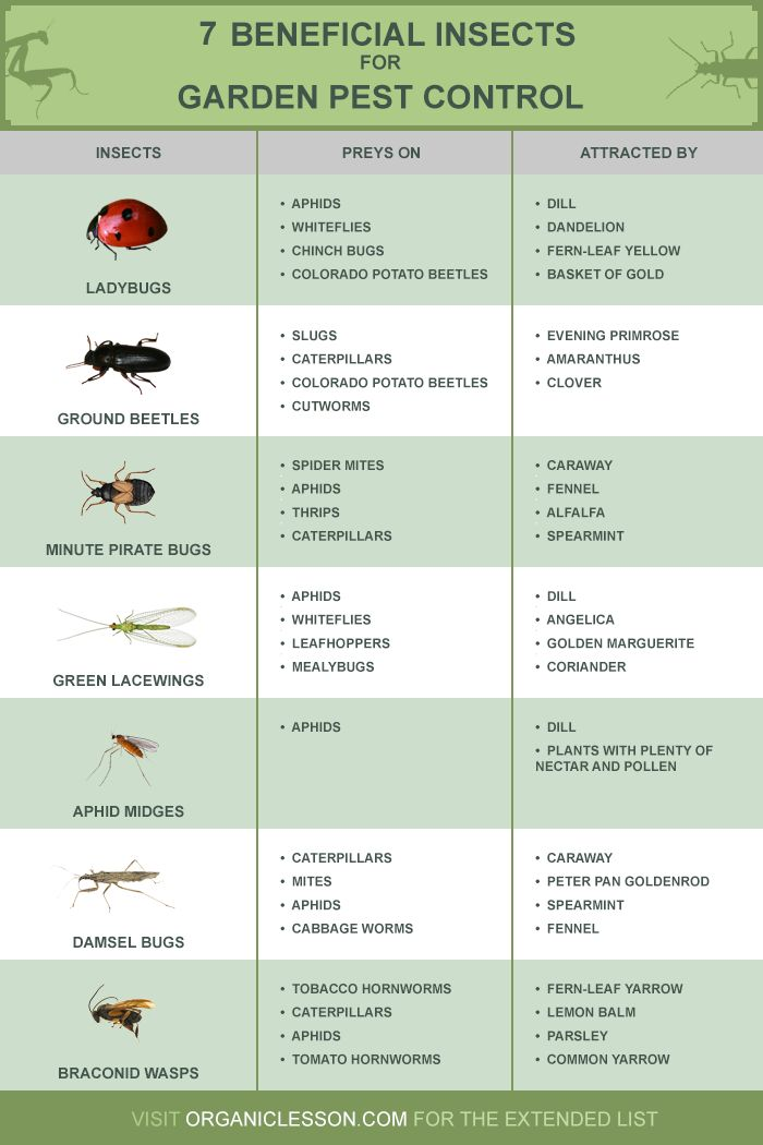 best gardening infographics images infographic  here are seven beneficial insects you could employ for natural garden