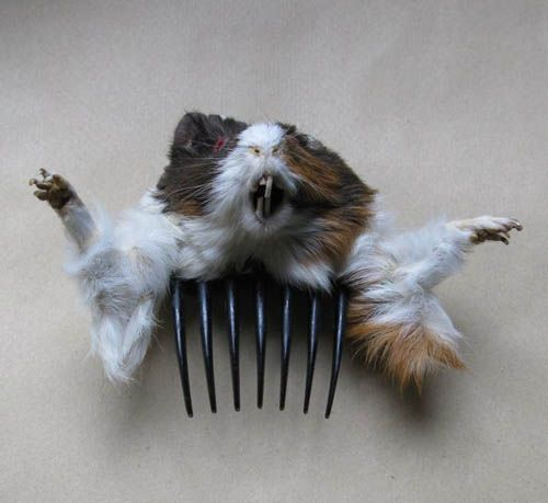 Oh God why?!?: Gift, Hairs, Funny Stuff, Things, Wtf, Haircomb, Hair Combs, Guinea Pigs