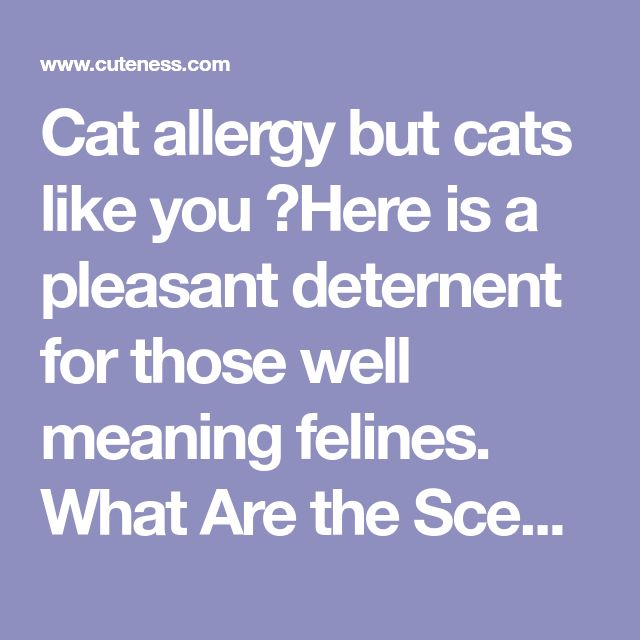 Cat allergy but cats like you ?Here is a pleasant deternent for those well meaning felines. What Are the Scents Cats Hate? | Cuteness