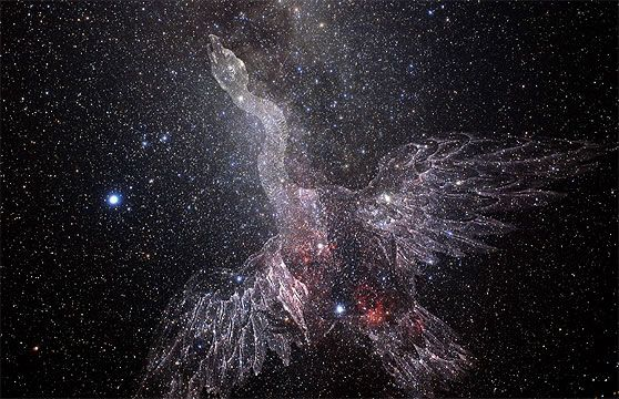 The constellations Vega and Lyra combine to create Cygnus, the stunning swan of the night sky.