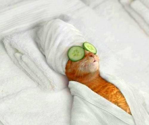 Zen Cat LoL :)