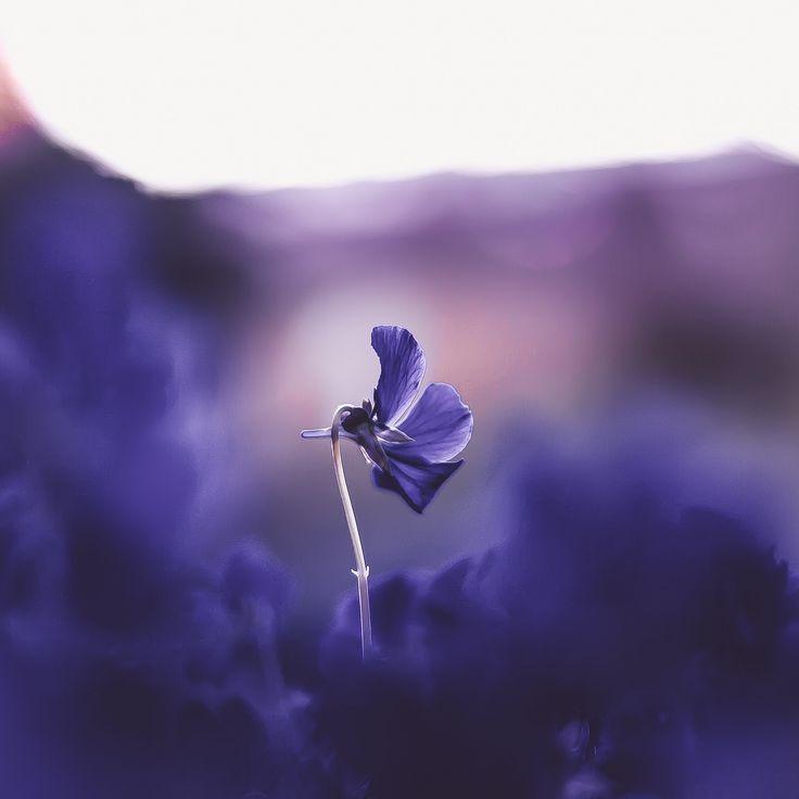 https://flic.kr/p/NSnq9z | Purple