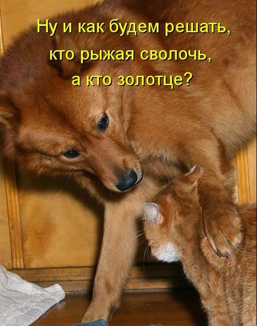 Днем рождения, картинки смешные собаки со словами