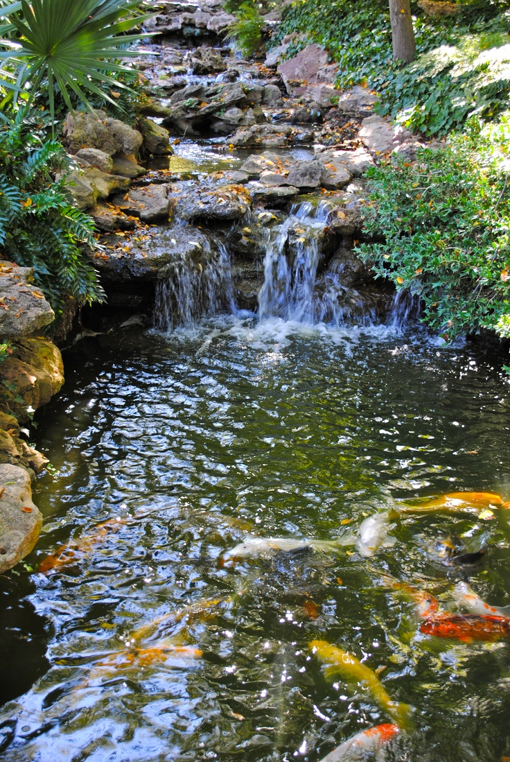 Coy pond, with waterfall.