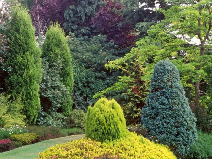 develop a long range plan for your garden and include the height and year