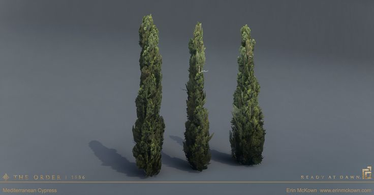Erin mckown cypress