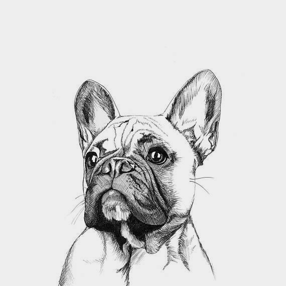 Pin By Cheryl S Smith On Bulldog French Bulldog Drawing French Bulldog Print French Bulldog Art